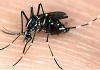 Dịch vụ diệt muỗi tại Bình Dương