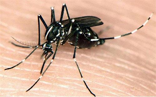 Phun diệt muỗi tại Tiền Giang