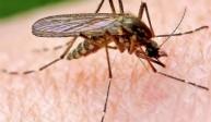 Phun diệt muỗi tại Bến Tre