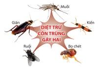 Dịch vụ diệt côn trùng Vĩnh Long